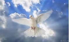 Healing Through A Pure Conscience, 1828 1/2 Broadway, Santa Monica, California, 90404, United States